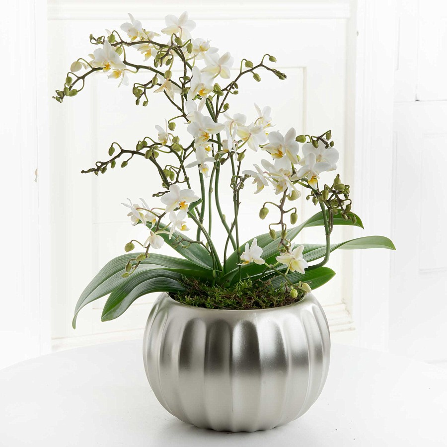 Buy an Orchids Globe for the 28th wedding anniversary.