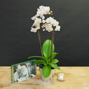 Buy her a white orchid for the 28th wedding anniversary