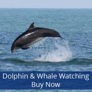 Treat them to a Dolphin & Whale watching trip.