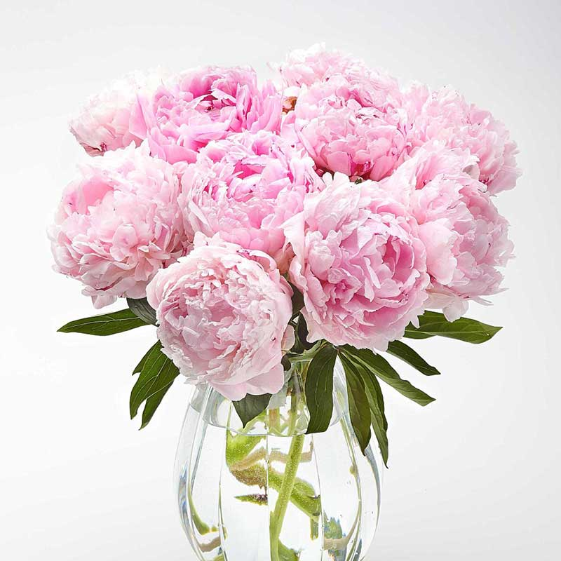 Buy her or them this beautiful bouquet of Peonies for this anniversary gift