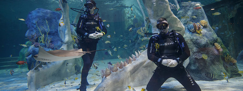 Take a diving course together and dive with sharks and rays for an experience not to forget on your anniversary