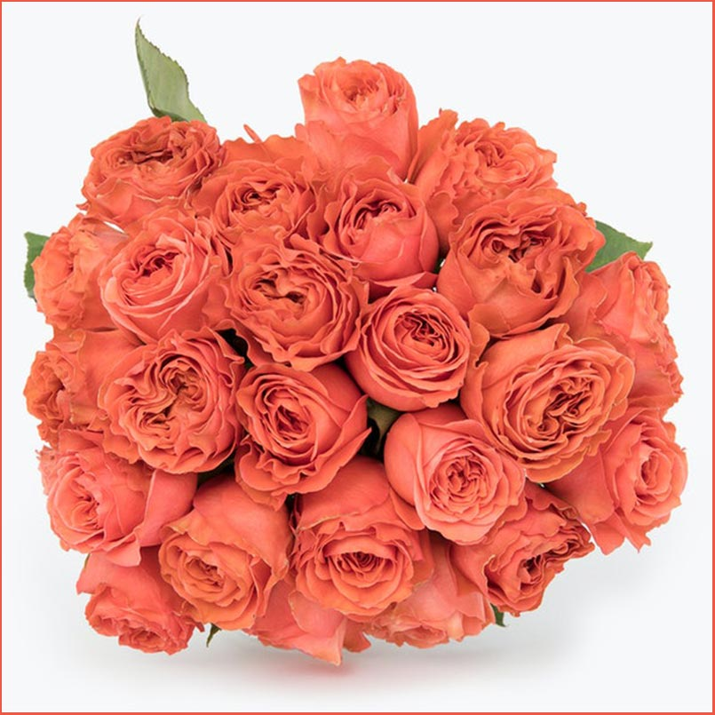 Buy the Coral Expression Rose Bouquet for this anniversary gift